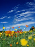 Field of Flowers in Front of a House in the Countryside Photographic Print