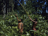 Yanomami Indian Hunters, Amazonas, Venezuela Photographic Print