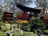 Japanese Tea Garden, San Francisco, California, USA Lámina fotográfica