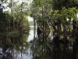 Amazon River, Brazil Photographic Print