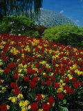 Bloedel Conservatory, Queen Elizabeth Gardens, Vancouver British Columbia, Canada Photographic Print