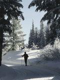 Mount Spokane State Park, Washington, USA Photographic Print