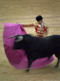 Bullfight Spain Photographic Print