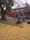 Autumn Leaves, Torii Gate, Nara Park, Nara, Honshu, Japan Photographic Print