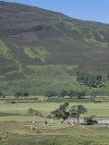 Braemar Golf Course, Braemar, Grampian, Scotland Photographic Print