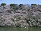 Cherry Blossoms, Couple Boating at Imperial Palace Moat, Chidorigafuchi Park, Tokyo, Honshu, Japan Photographic Print