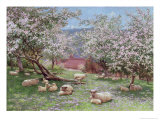 Appleblossom Giclee Print by William Biscombe Gardner