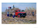 Loading Canes Giclee Print by Victor Collector