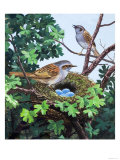 Sparrows Nest Giclee Print