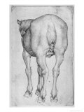 Horse Giclee Print by Antonio Pisani Pisanello