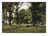 The Elm Walk Giclee Print by William Grylls Addison