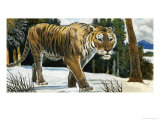 Tiger Giclee Print by Arthur Oxenham