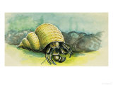 The Hermit Crab Giclee Print by D. A. Forrest