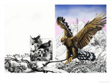 Nature's Kingdom - the Eagle Giclee Print by Susan Cartwright