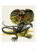 The Frilled Lizard Giclee Print by D. A. Forrest