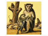 Rhesus Monkey Giclee Print by Eric Tansley