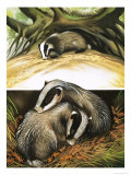 Mr and Mrs Badger at Home Giclee Print by David Pratt