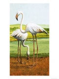 Flamingoes Giclee Print by D. W. Makela