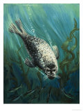 Our Sea Friend the Seal Giclée-Druck von John Rignall