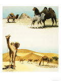 Camels Giclee Print by Arthur Oxenham