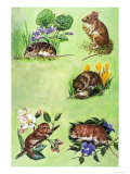 Mice, Voles and Shrews Giclee Print by Eric Tansley