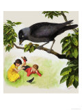Jackdaw Giclee Print by Clive Uptton
