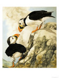 Puffin Giclee Print by R. Worr