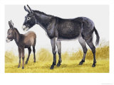 The Donkey Giclee Print by Arthur Oxenham