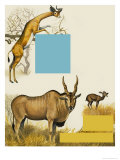 African Animals Giclee Print by Arthur Oxenham