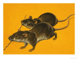 Two Blind Mice Giclee Print by Bob Hersey