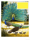 Peafowl and Pheasants Giclee Print by Arthur Oxenham