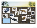 Assorted Animals Giclee Print by David Nockels