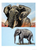 All Sorts of Elephants Giclee Print by David Pratt