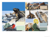 The Galapagos Islands Giclee Print by Arthur Oxenham