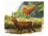 Red Deer Giclee Print by Eric Tansley