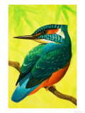 Kingfisher Giclee Print by Bob Hersey