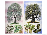Trees You Can See Giclee Print by David Pratt