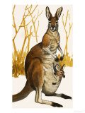 Kangaroo Giclee Print by Eric Tansley
