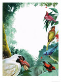 The Colourful Cotingas Giclee Print by Leslie Field Marchant