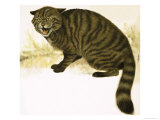 Rare Breeds: The Wildcat Giclee Print by David Nockels