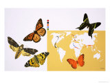 Butterflies and Moths Giclee Print by David Nockels