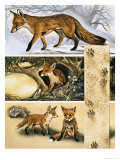 The Fox Giclee Print by David Pratt