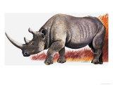 Rhinoceros Giclee Print by Arthur Oxenham