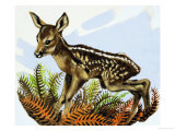 The Roe Deer Foal Giclee Print by David Pratt