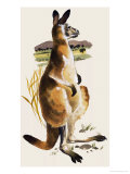 The Kangaroo Giclee Print by Harold Tamblyn-watts