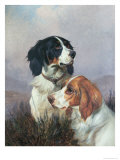 Setters on a Moor, 1892 Giclee Print by Colin Graeme