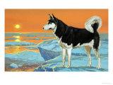 Husky Dog Giclee Print by Angus Mcbride