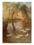 Ducks Giclee Print by Lindsay Macarthur