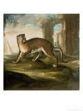 Jaguar Giclee Print by Andrea The Elder Scacciati