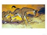 Giraffe Kicking Lion Giclee Print by Angus Mcbride